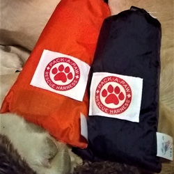 Pack-A-Paw black and orange